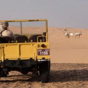 Vintage-Land-Rover-Fleet-(12)