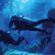 Shark_Dive_1