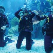 Shark_Dive_2