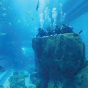 Shark_Dive_4