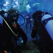 Shark_Dive_5
