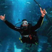 Shark_Dive_6