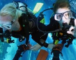 Shark Dive - Main